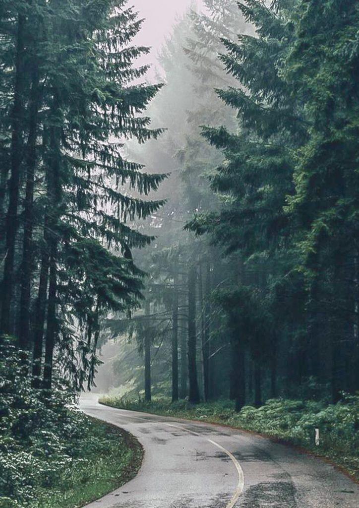 جنگل هیریکانی، سرمایه ملی